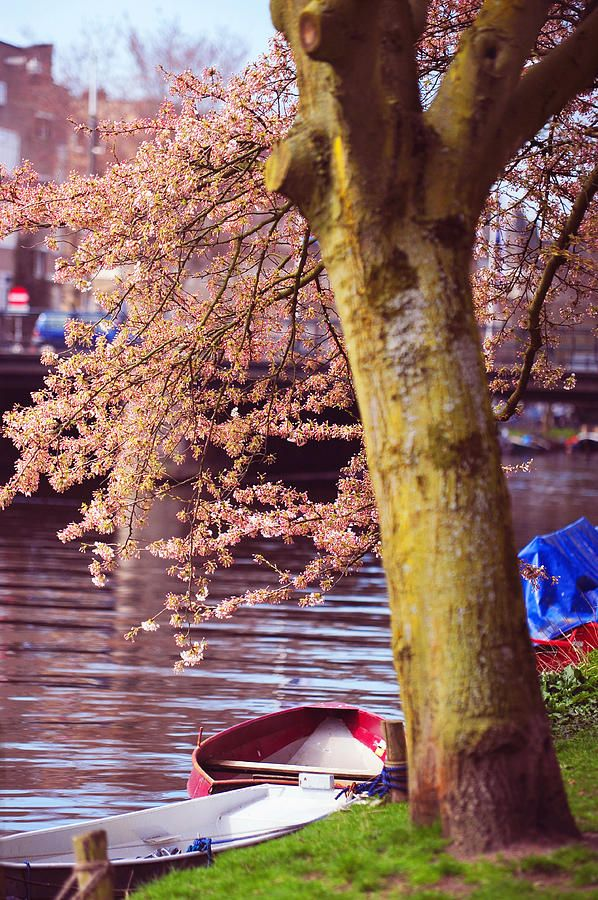Red Canoe. Amsterdam Canals With Blooming Trees. Pink Spring In Amsterdam by Jenny Rainbow