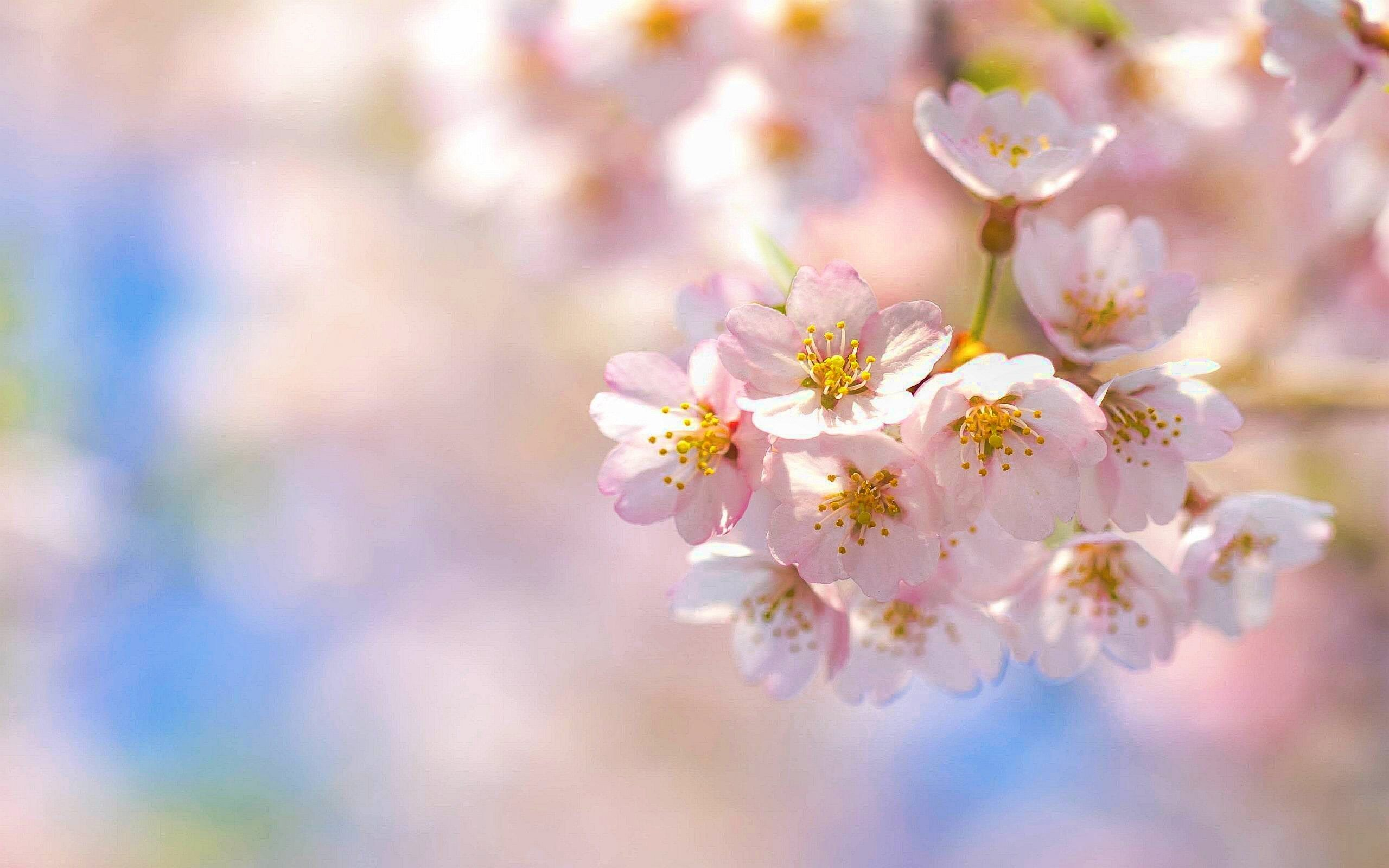 rezultatul imaginii pentru imagini mari cu flori de primavara