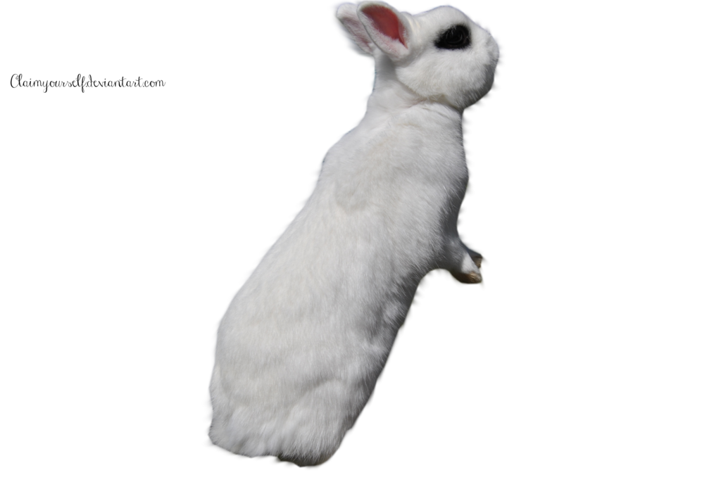 White Rabbit Precut Png Stock By Claimyourself On Deviantart White Rabbit Png Precuts