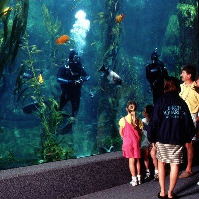 Birch Aquarium In San Diego Aquariums San Diego Vacation San