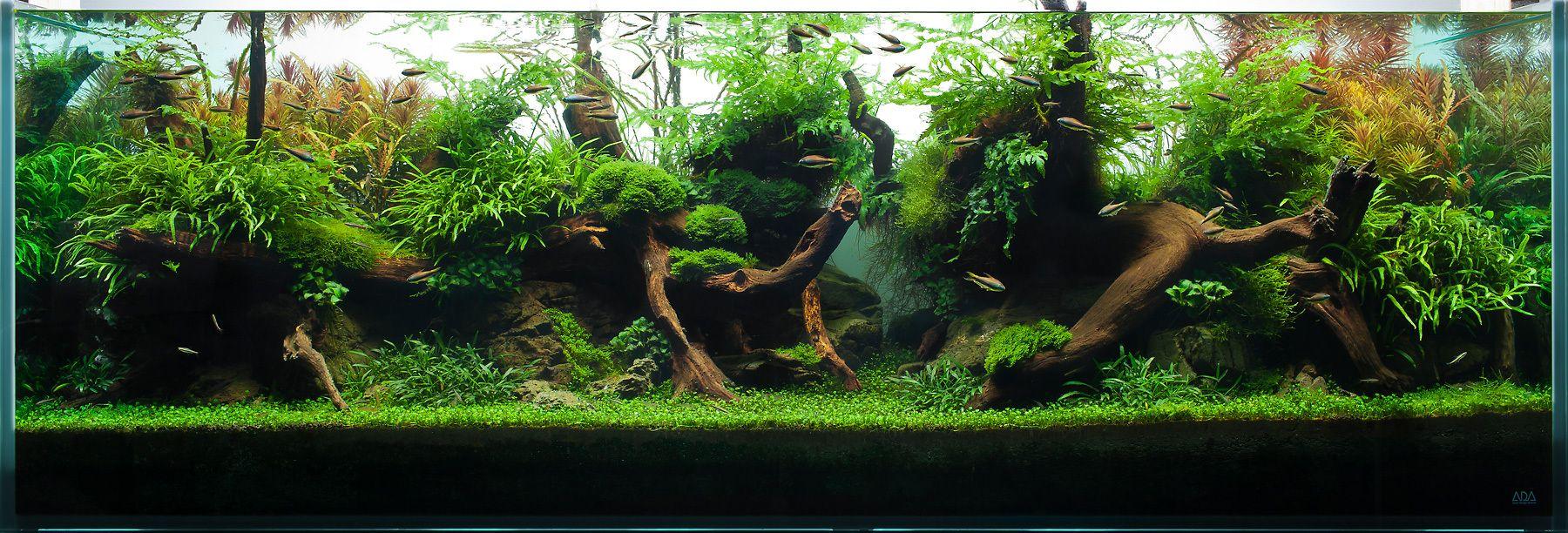 Fish tank real plants - Aquarium Design Group An Aquascape Of Highlight And Shadow