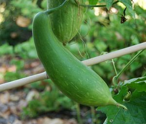 Offering rare and heirloom seeds perfect for any climate. Over 1500 varieties of peppers, tomatoes, vegetables, heirlooms, tropical fruits and ornamentals.