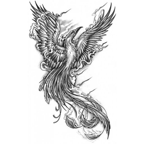 Tattoo Flash The Phoenix Liked On Polyvore Featuring Backgrounds Y Props