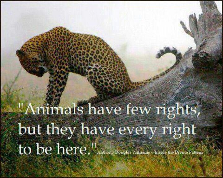 Animal rights should be important to all of us. (With