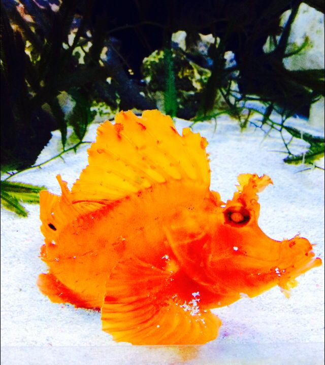 Cool orange fish!