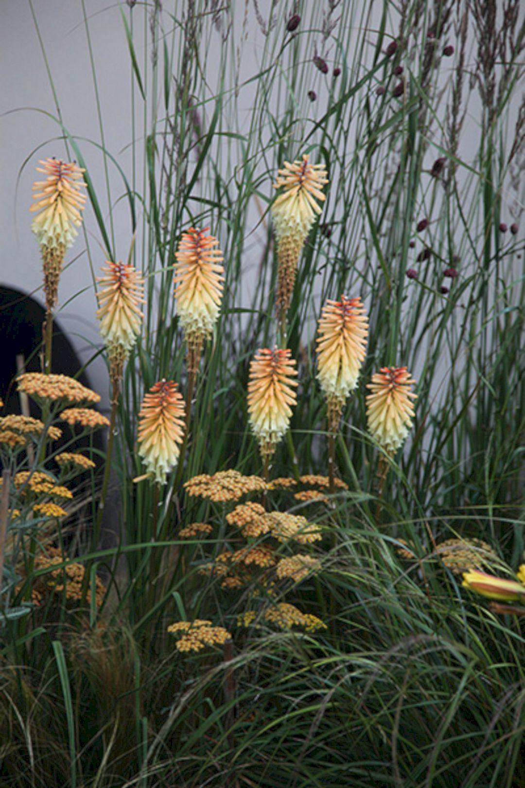Best 75+ Best Planting Combination Ideas For Beautiful Garden Https://freshouz.com/75-best-planting-combi… | Beautiful Gardens, Plant Combinations, Flower Landscape