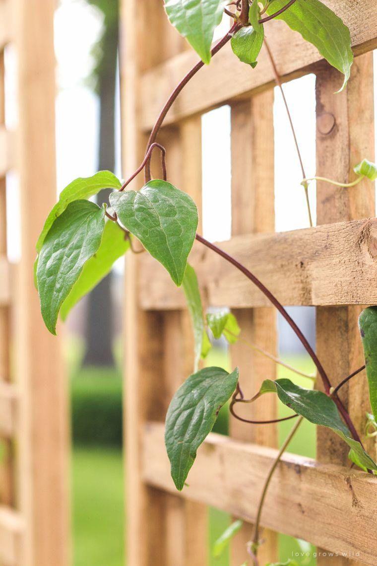 Treillis Bois Pas Cher jardinière avec treillis extérieure à réaliser soi-même