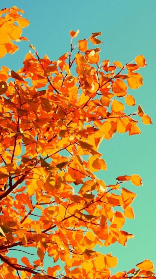Get in the mood for fall with some new phone wallpaper