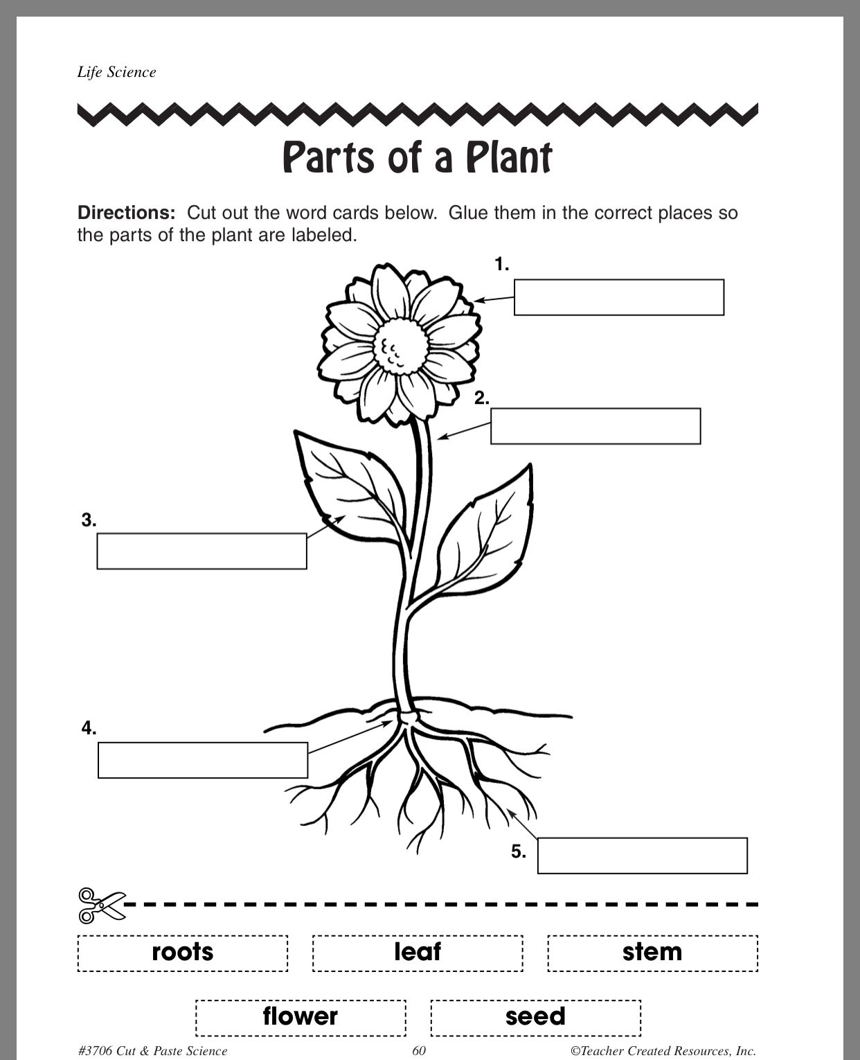 Pin By Ahlam On Plants Worksheets
