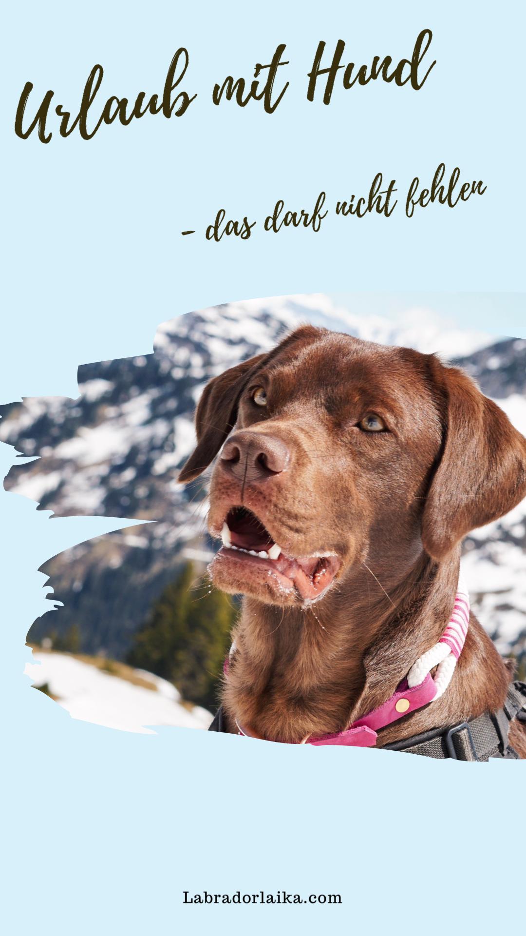 Fina In 2020 Hunde Tiere Susseste Haustiere