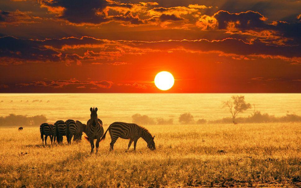 La Savane Africaine Pic De La Belle Zebree Wallpaper Animaux Beaux Photographie Animaliere Animales