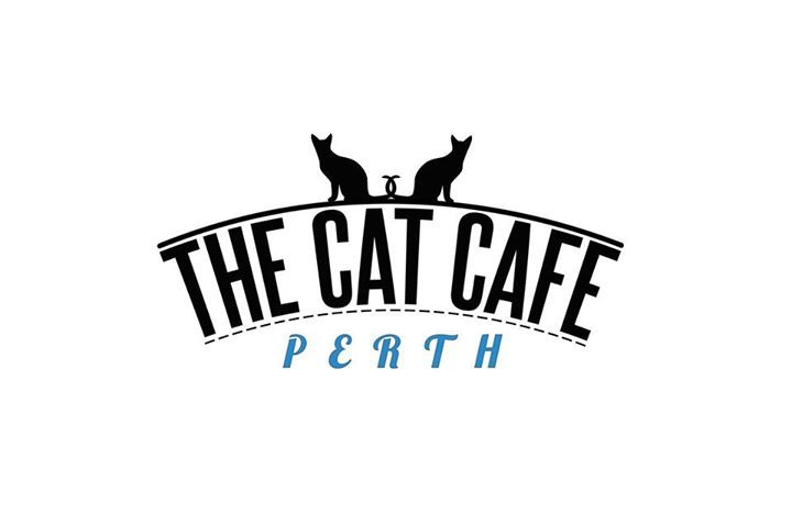 Cat Cafe Perth Helping Rescue Cats Will Open Soon In