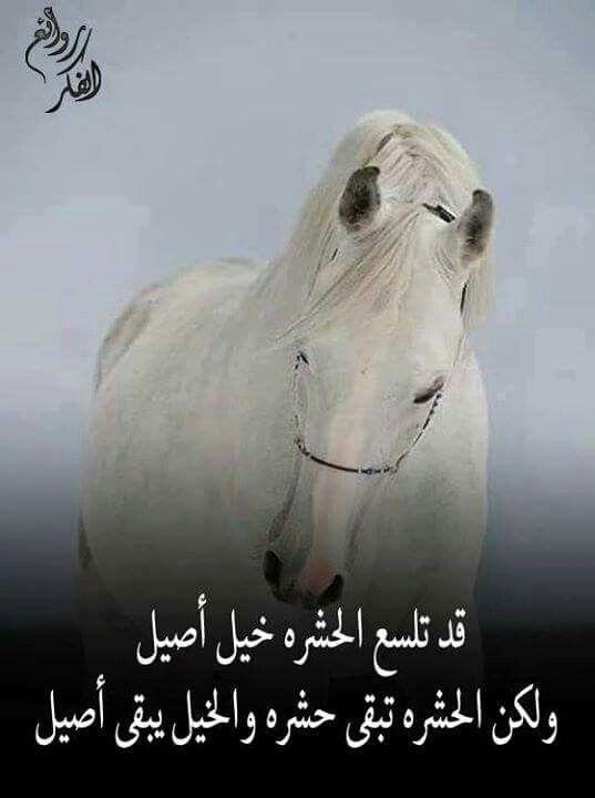 بعض العالم حشرة و مفكرين حالهم شي مهم Arabic Quotes Great Words Words