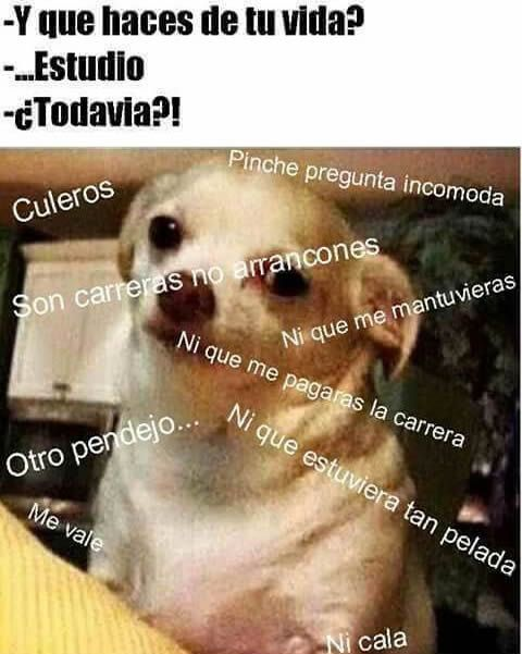 Spanish Meme Class Memes Memes Sarcastic Relatable Meme
