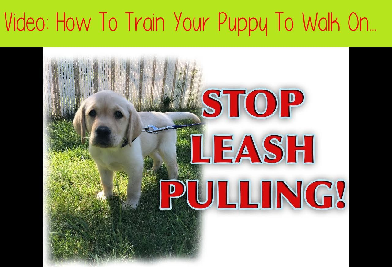 How To Train Your Puppy To Walk On A Loose Leash Prefer To Read