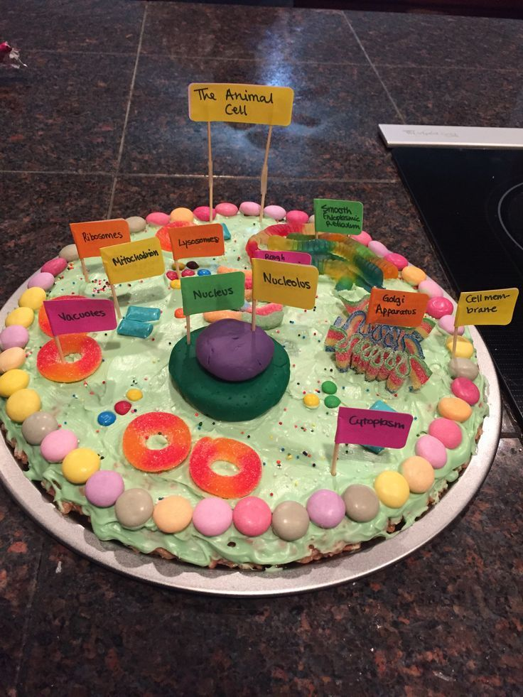 Image result for Edible Cells | Animal cell, Animal cell ...