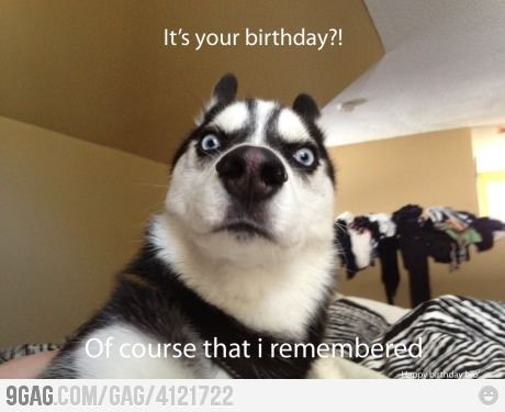 Birthday Funny Animal Pictures Funny Animals Cute Animals
