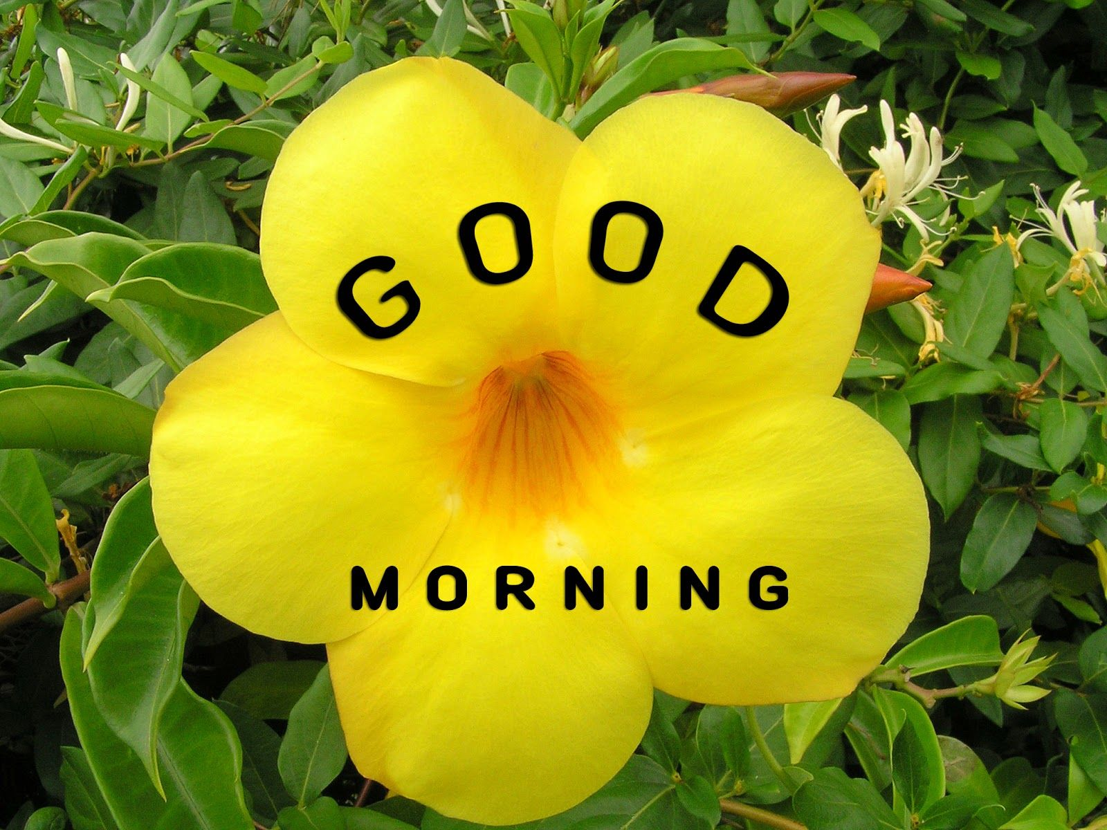 Yellow flower good morning images with quotes good morning images yellow flower good morning images with quotes mightylinksfo