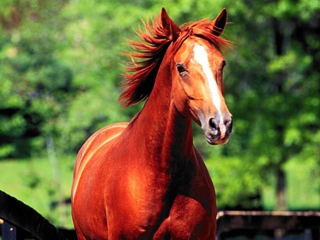 Download Wallpaper Horse Green - 20941812f0a5c33c57effee92448a020  You Should Have_939781.jpg