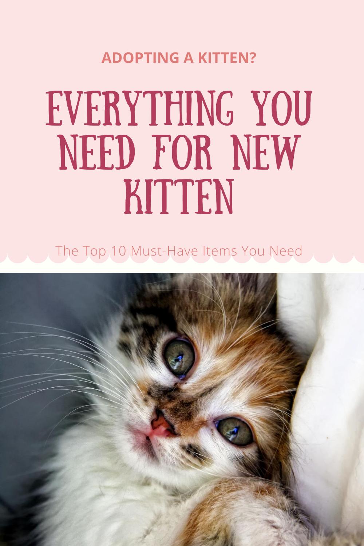 New Kitten Supplies In 2020 Kitten Supplies Kitten Kitten Adoption