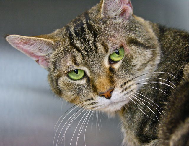 London Canning Town Animals In Need Of A Home Celia Hammond Animal Trust Uk Rescue Shelters Animals Animal Rescue Cats