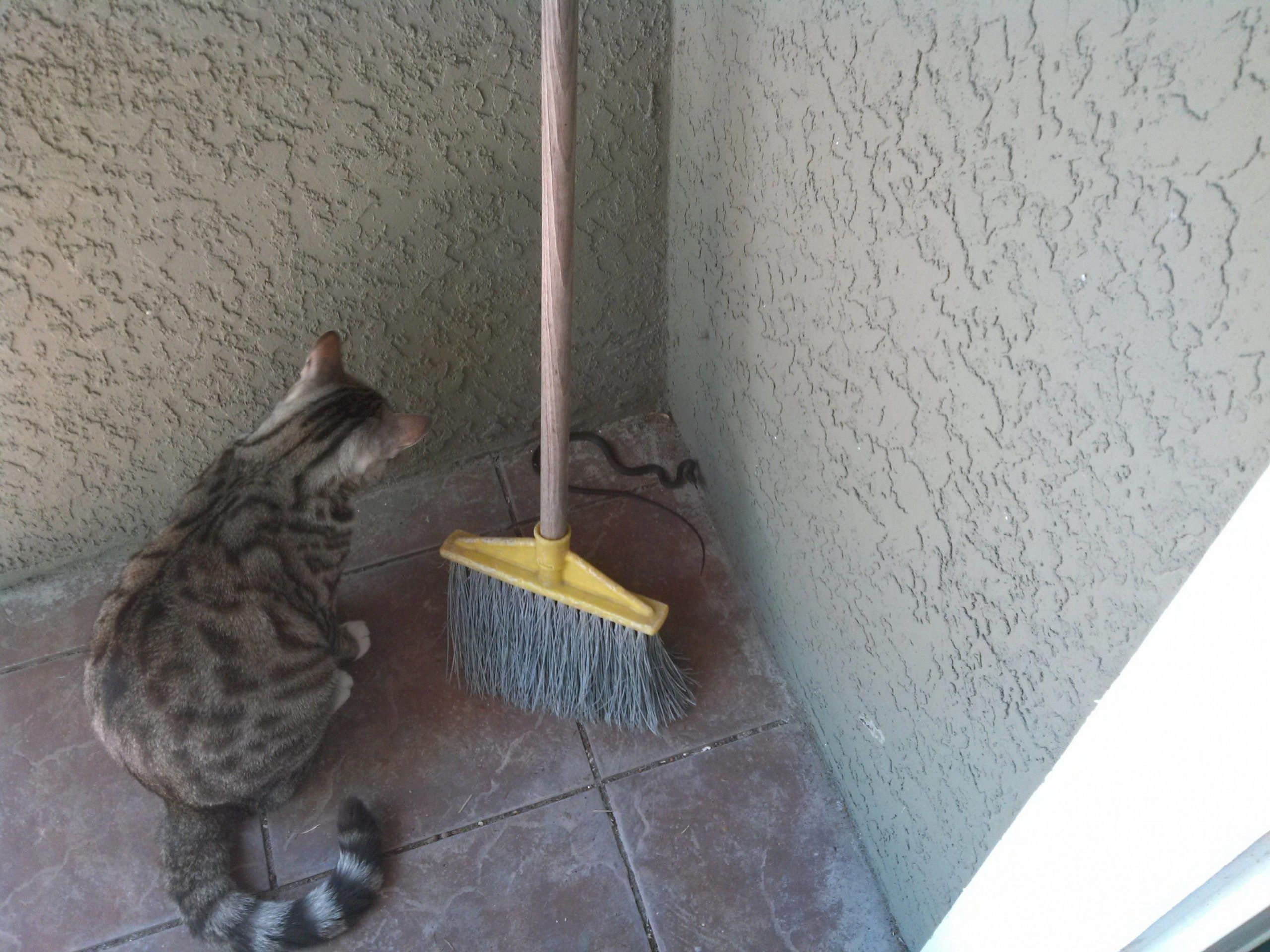 12 Cute Craigslist Munchkin Cat Wallpaper In 2020 Cat Has Fleas Cats That Dont Shed Tidy Cats