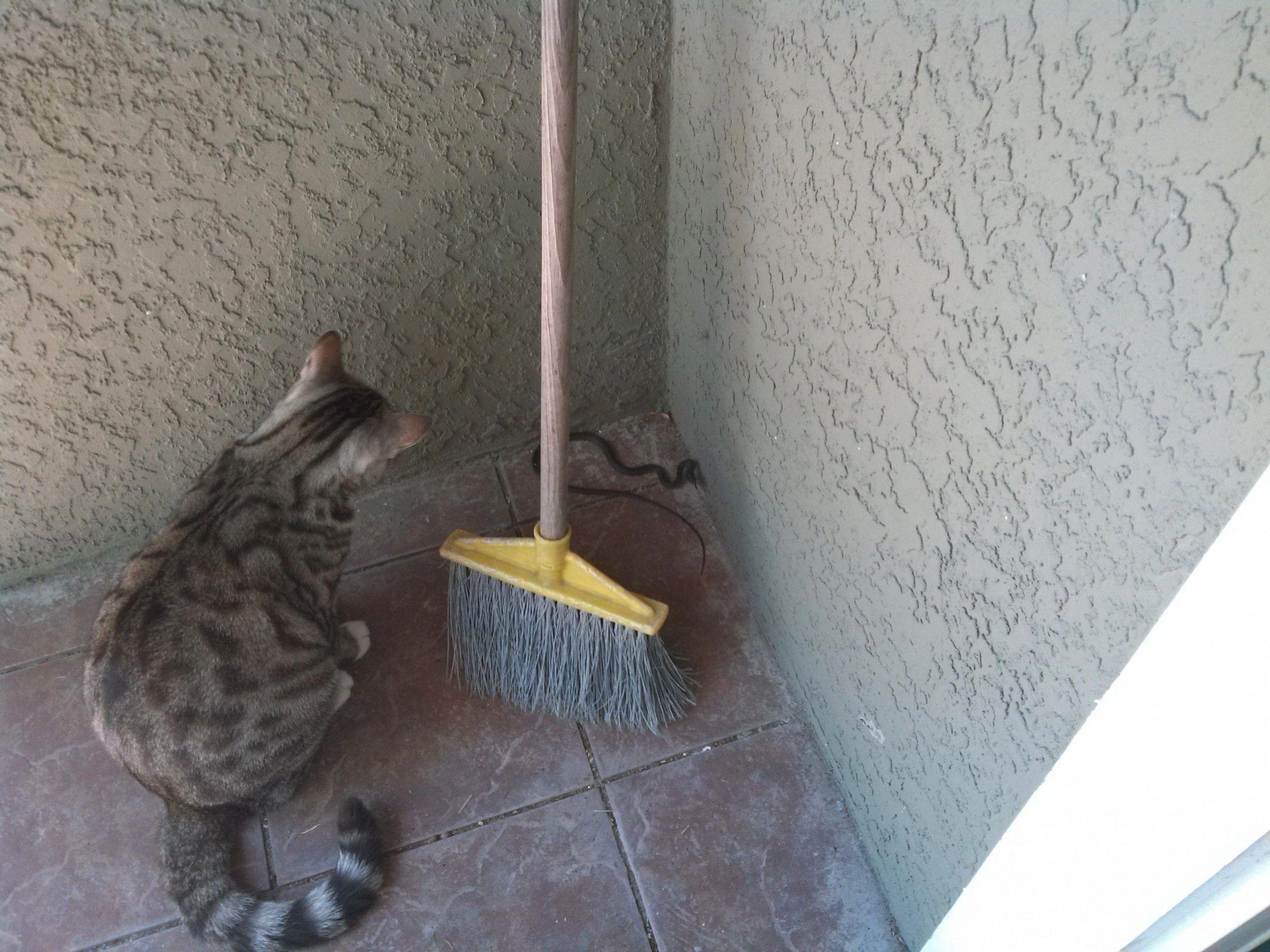 12 Cute Craigslist Munchkin Cat Wallpaper In 2020 Cat Has Fleas