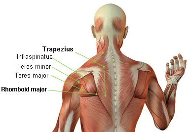 Rhomboid Small Muscle That Sits Deep In The Trapezius