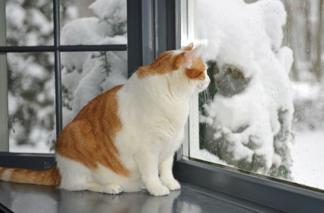 Cat Looking Outside Cats Cat Window I Love Cats