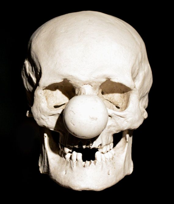 Clown Skull in Resin-Gypsum Composite and Hand Finished.  Size: 19cm. (7 ½ in) Long. 14cm. (5 ½ in) wide. 19cm (7 ½ in) High