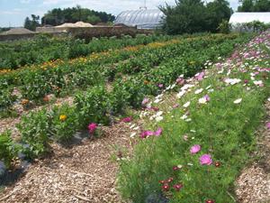 U Cut Flower Garden.... Uses Lots Of Mulch Google Image Result