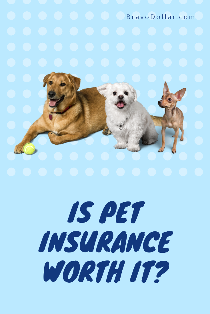 Is Pet Insurance Worth It Pets Cat Insurance Pet Insurance