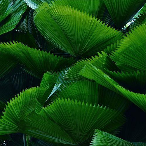 Grünpflanzen Green Plants Zimmerpflanzen: Plants …