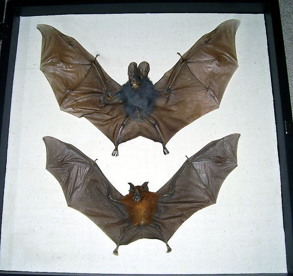 Seriously, you guys: I love bats. LOVE THEM.