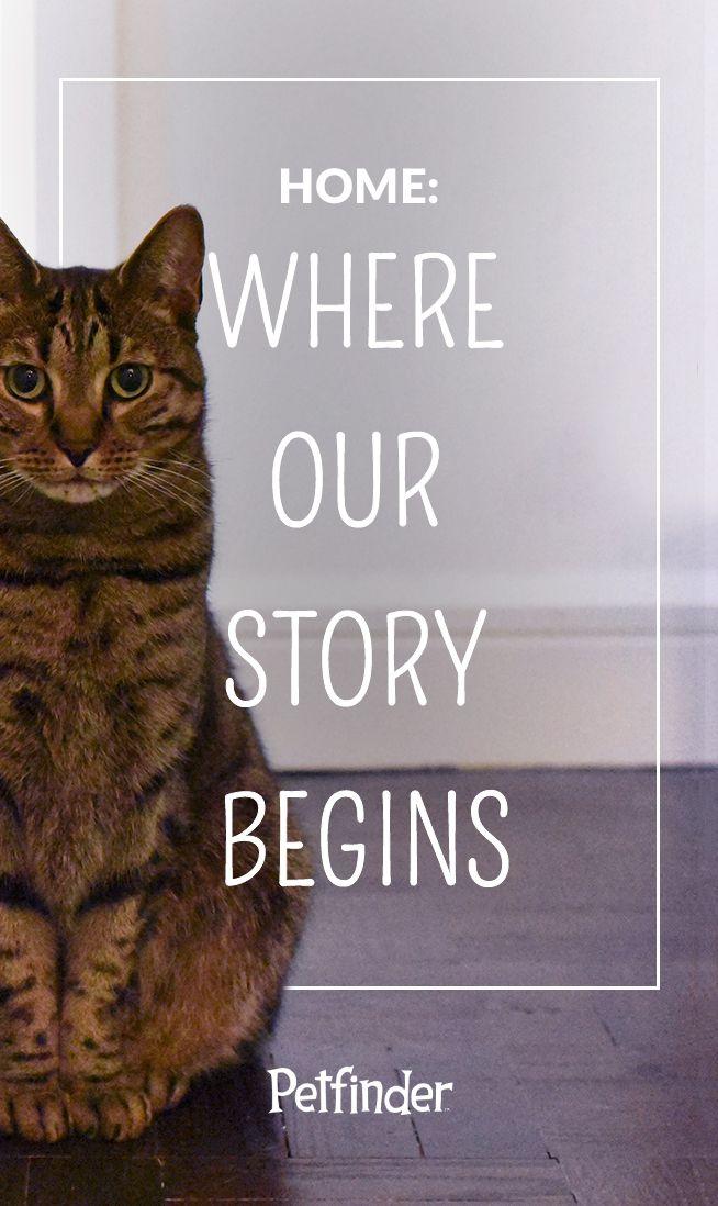 Pet Adoption Information Petfinder Cute Animal Quotes Pet Adoption Animal Adoption Quotes