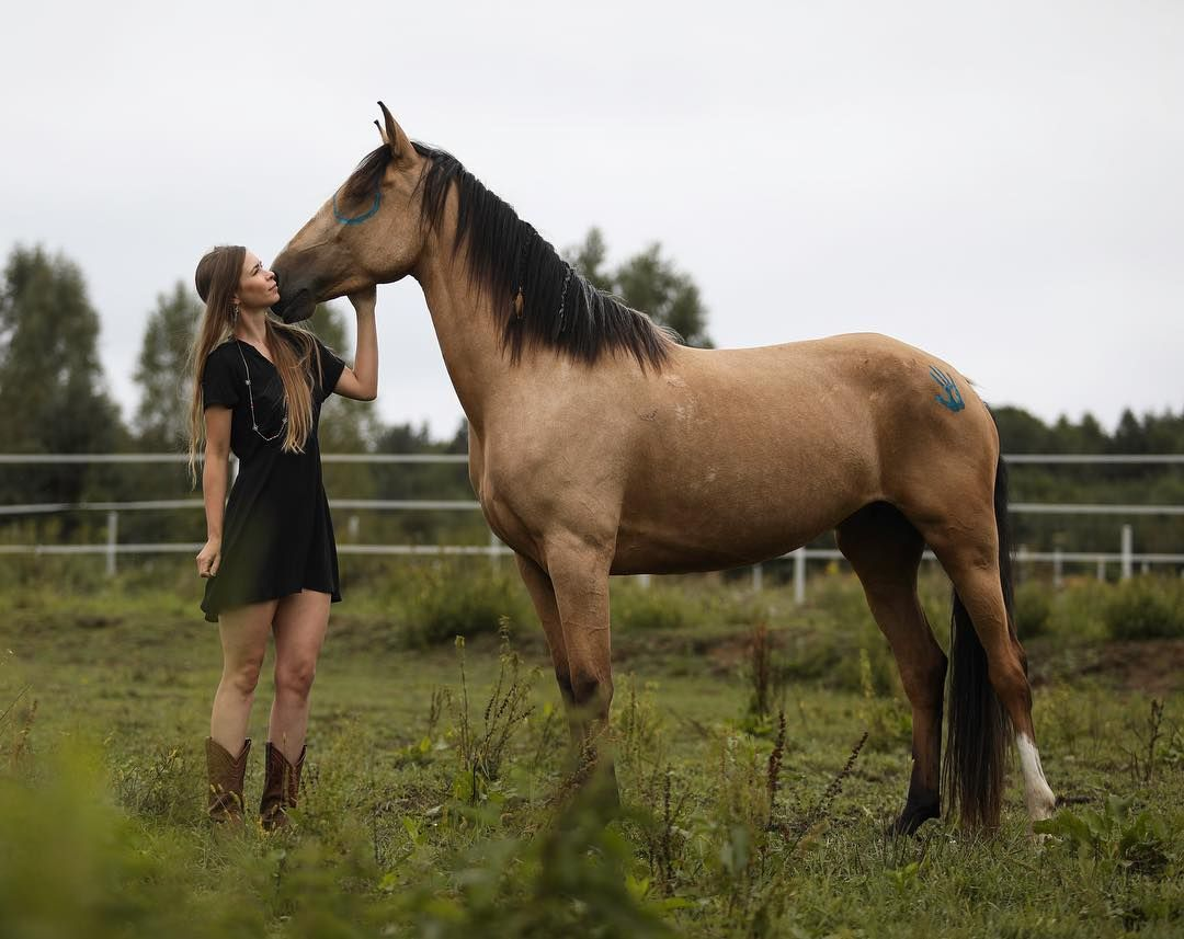 Lulu Is My 4 Year Old Akhal Teke X Irish Sports Horse