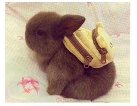 Alfredo the backpacker bunny