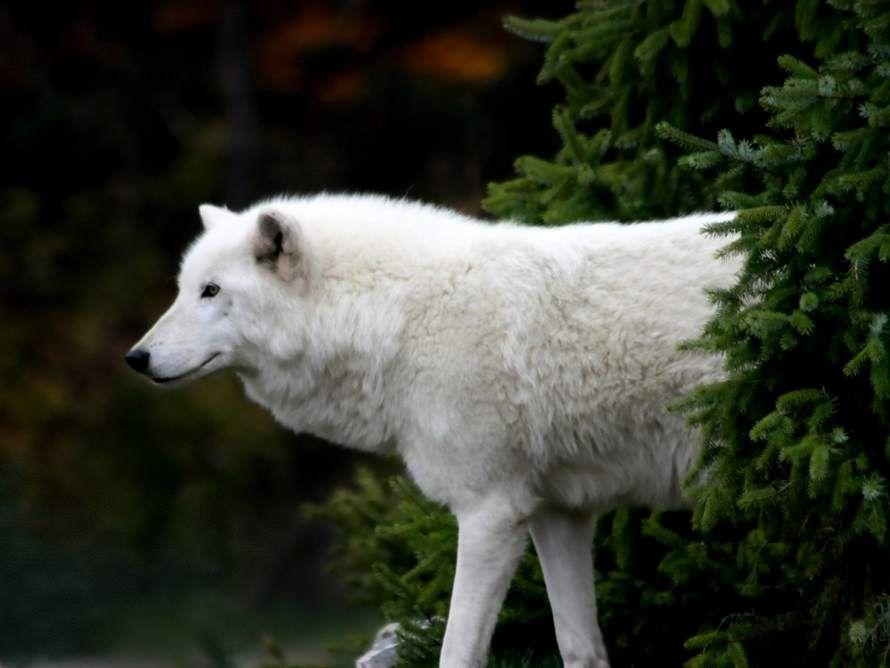 Albino and Rare White Animals – Animal Photo Gallery