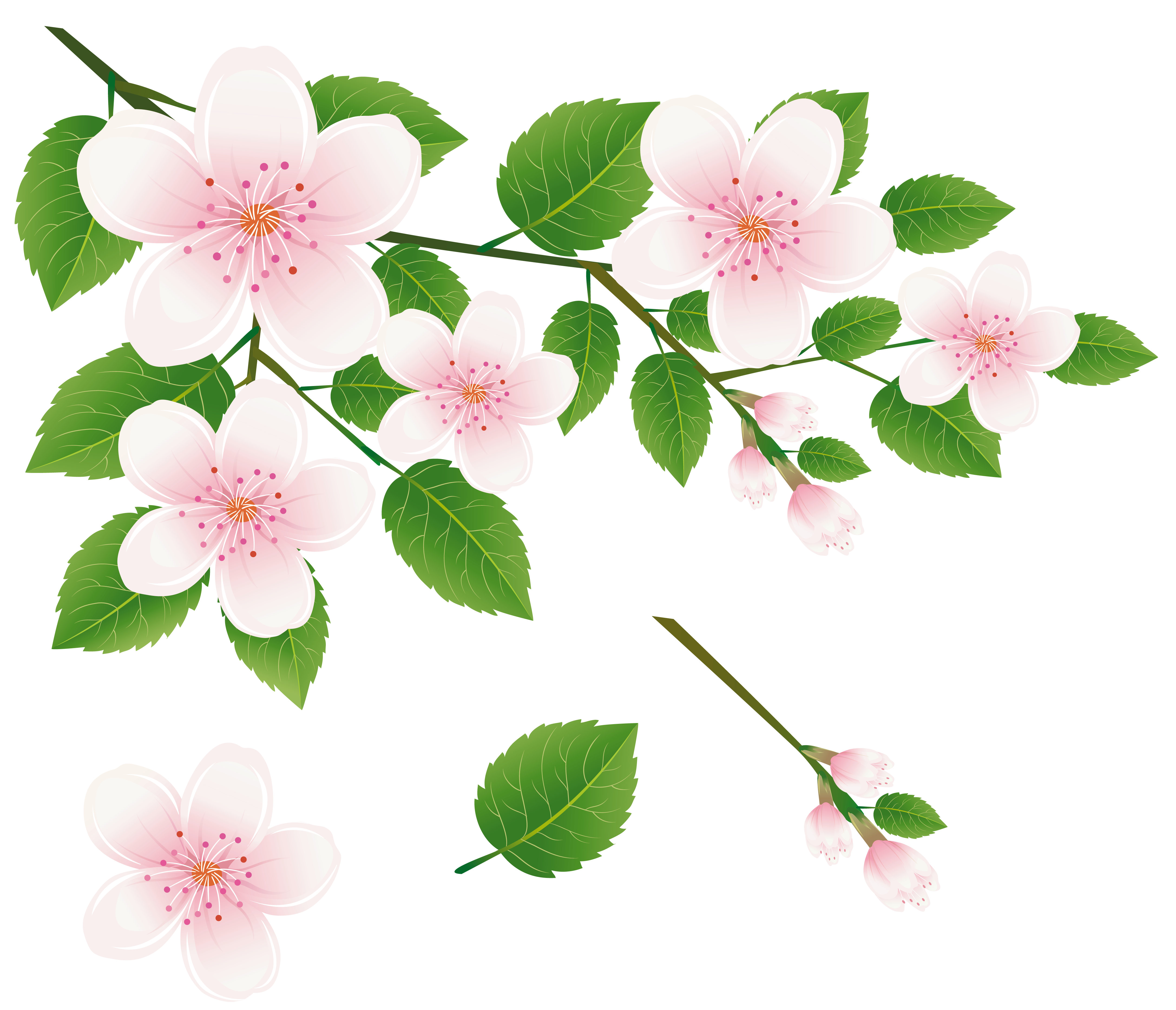 Spring Tree Branch with Flowers PNG Clipart Picture