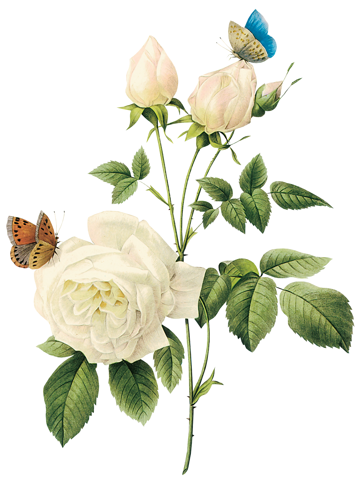 vintage flowers design Pesquisa Google Artesanato