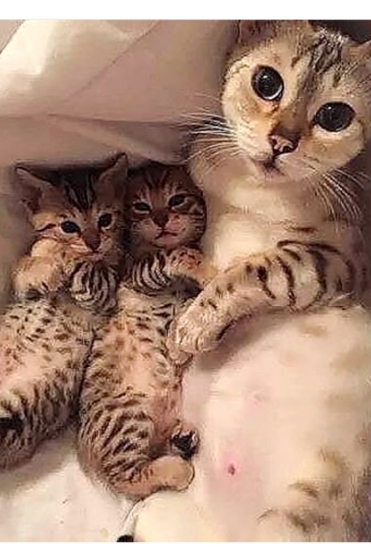 Cute Cat Mom And Kittens Cute Cats And Kittens Cute Cats Cute Baby Animals