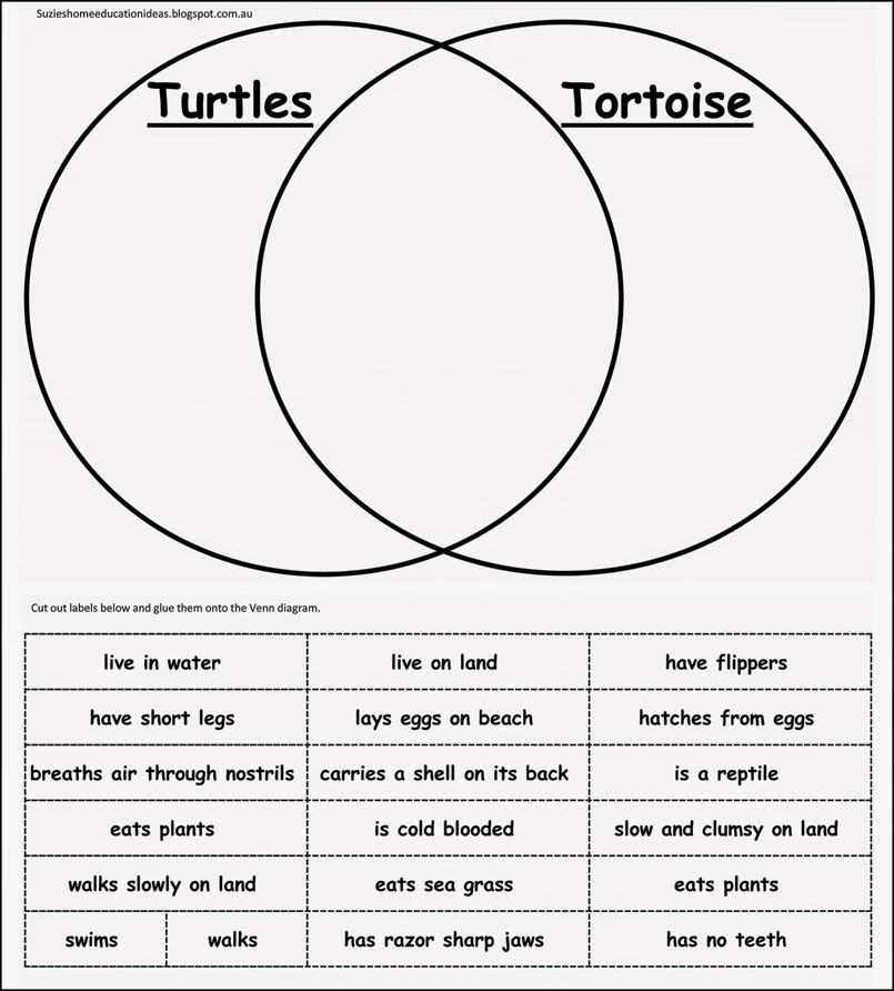 10 ideas for learning about turtles venn diagrams diagram and turtle 10 ideas for learning about turtles printable venn diagram more ccuart Images