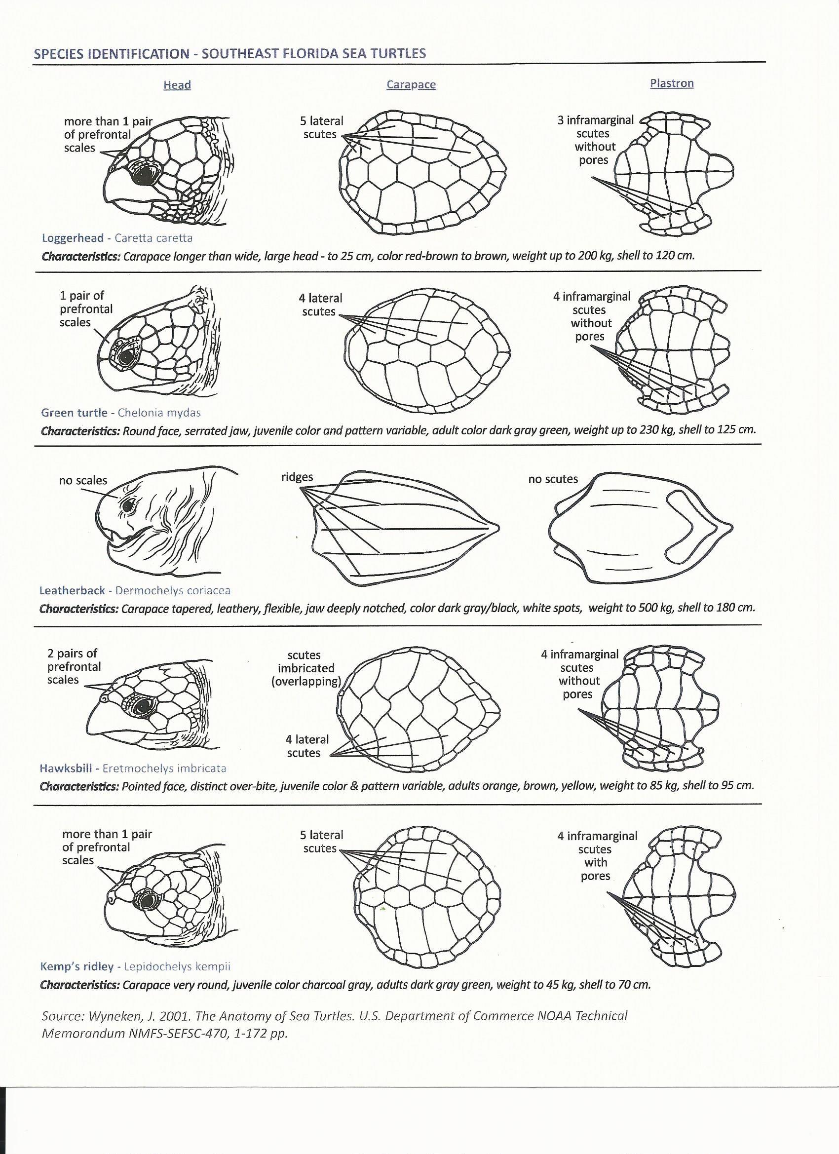 Sea Turtle Id Sheet