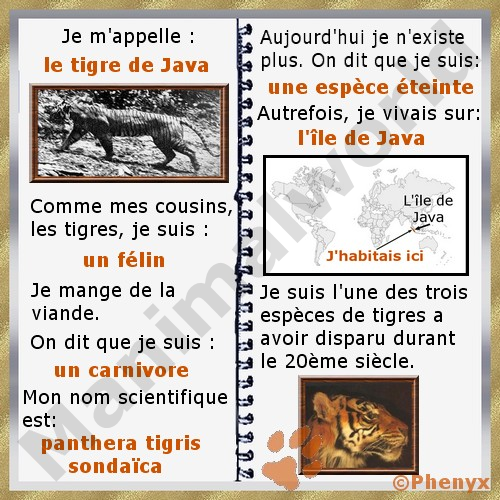 Tigre De Java Panthera Tigris Sondaica Apprendre Le Francais Tigre De Java Vocabulaire Francais
