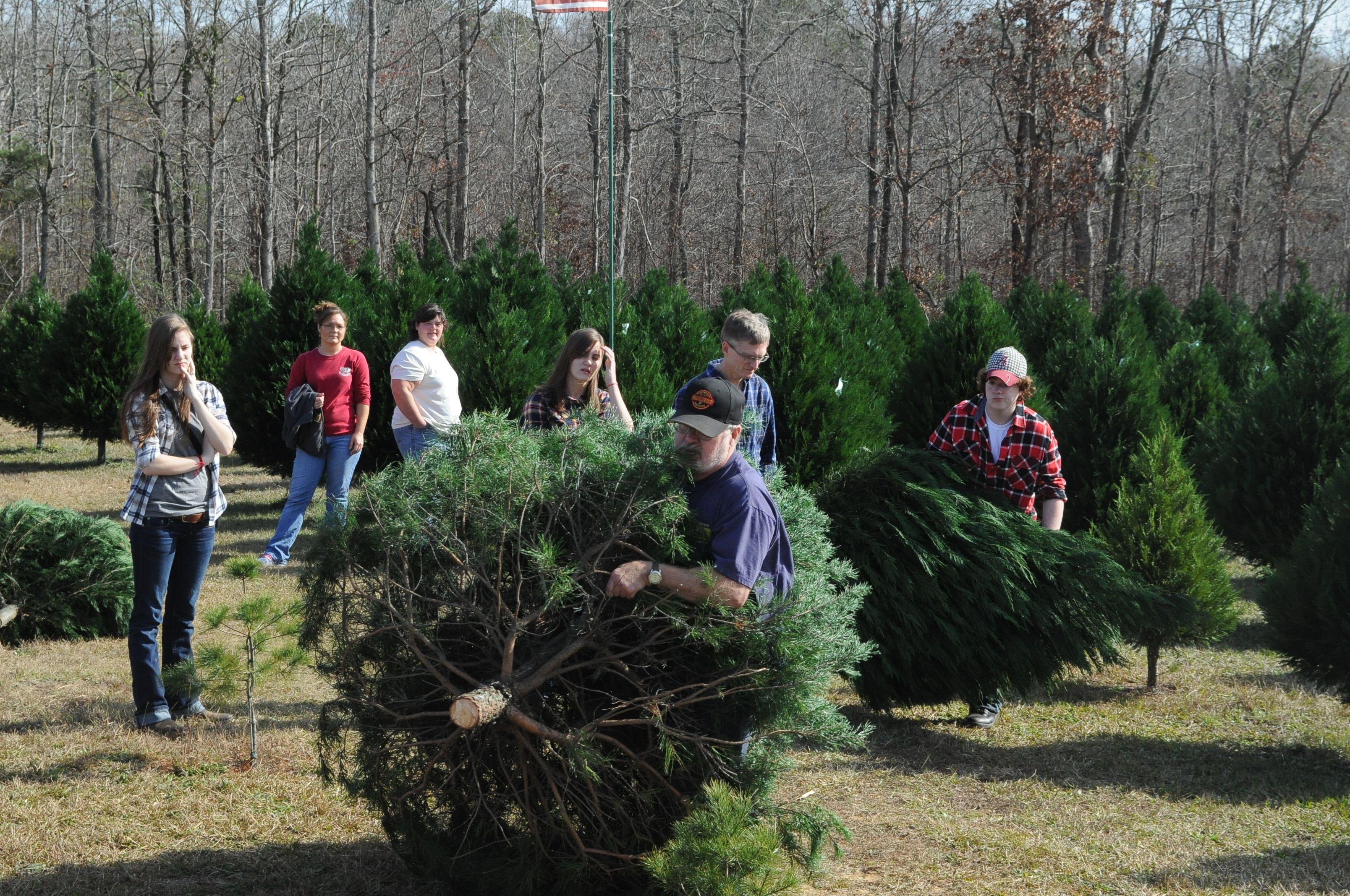 Christmas Tree Farm In Alabama Alabama Christmas Christmas Tree Farm Tree Farms