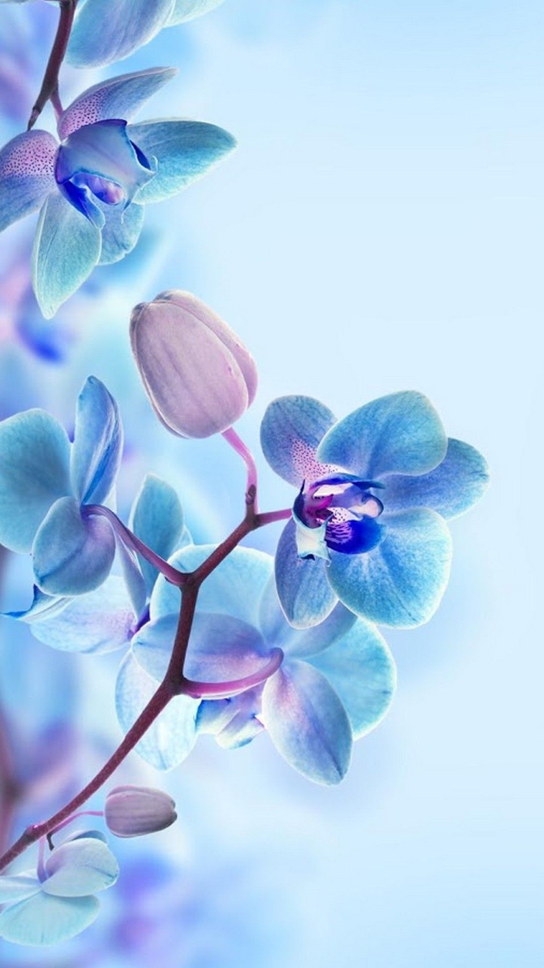 3d Flower Hd Wallpapers For Mobile Best Hd Wallpapers Blue Flower Wallpaper 3d Wallpaper For Mobile Wallpaper Images Hd