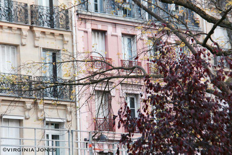 Paris Through My Lens: Rose