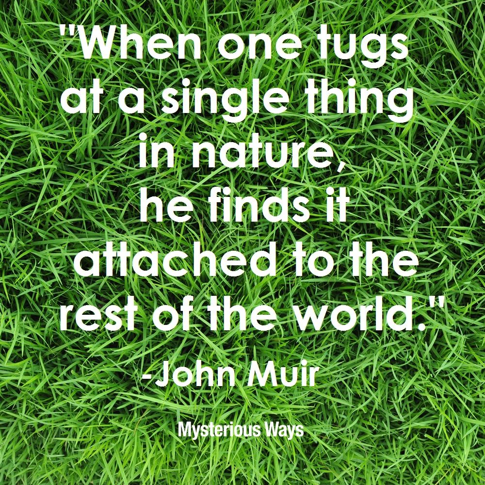 Happy #EarthDay! Where in nature do you feel most connected to God? #JohnMuir #nature #world