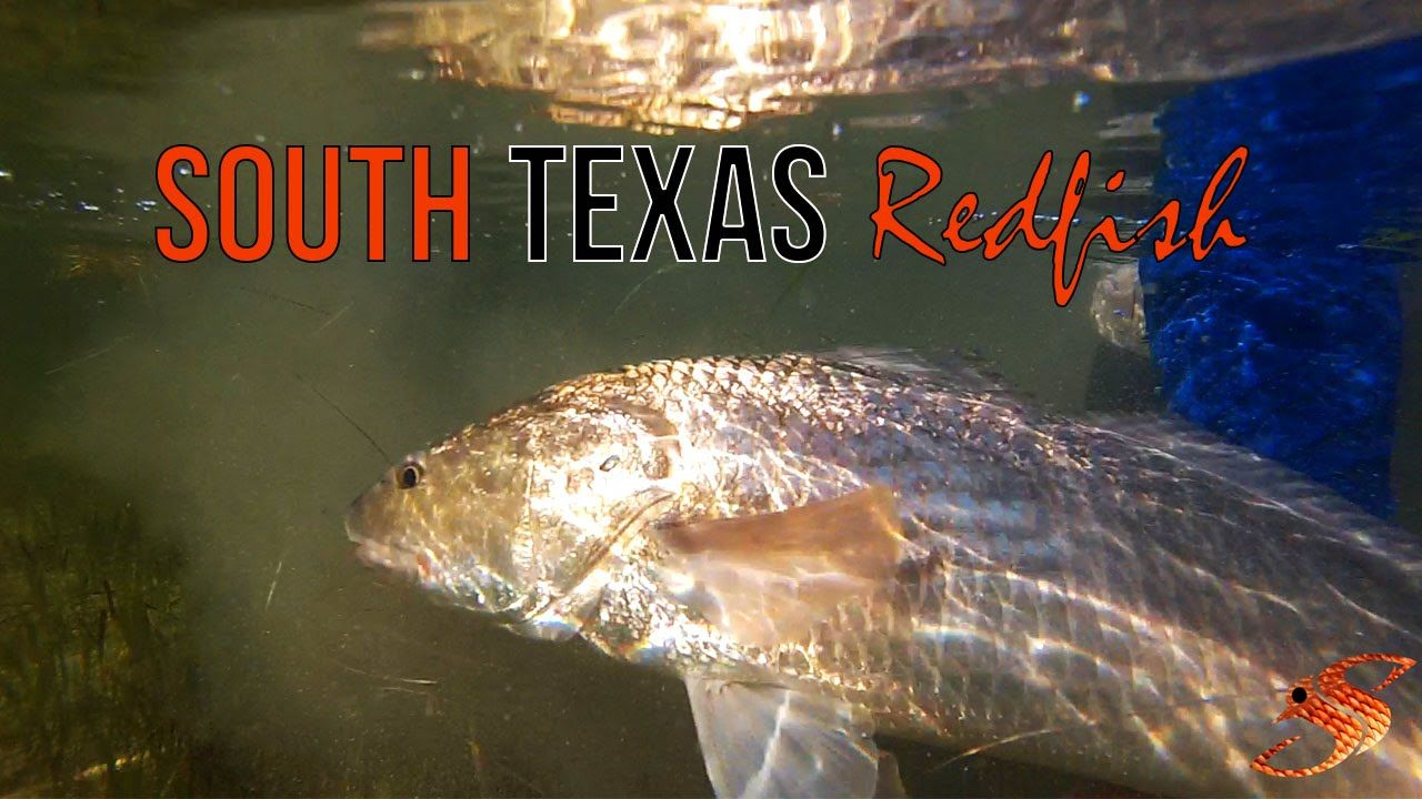 Sight Casting South Texas Redfish What a Blast! South
