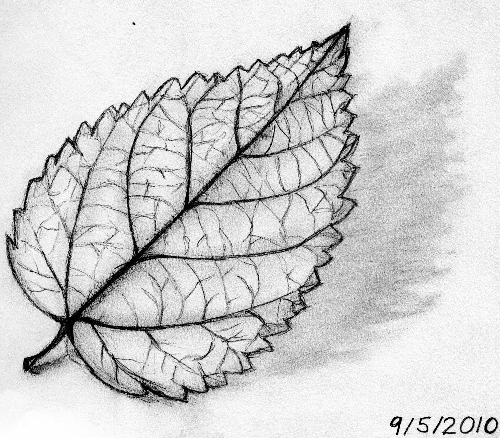 Pencil Sketch Leaf